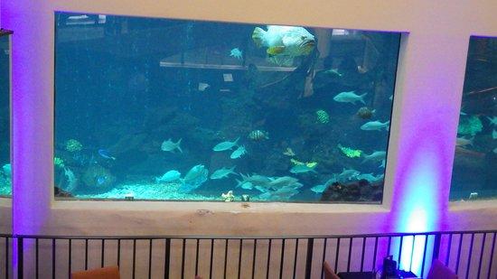 Pacific Beach Hotel: hotel aquarium in restaurant