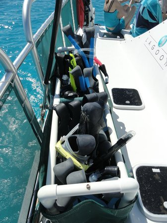 WildQuest : Snorkel gear ready to go swimming with the dolphins