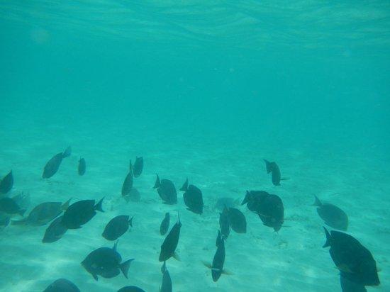 Praia Noronky : Peixinhos