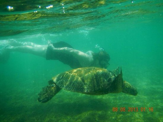 Oahu Spot Tours: Ron took us snorkeling and we were able to swim with the sea turtles! He knows the best places s