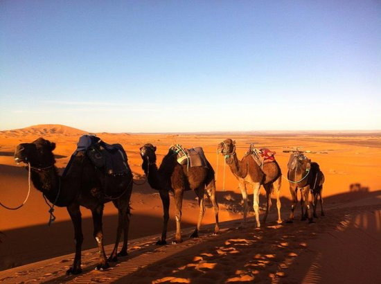 Anyas Travel: Nomads life with camels