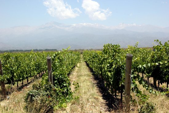 Trout & Wine Tours: Vineyards of the Andes