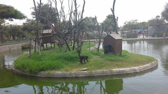La Isla De Los Monos Picture Of Parque Zoologico Huachipa Lima Tripadvisor El reconocido zoológico de huachipa, el único del país perteneciente a la asociación mundial de zoológicos y acuarios (waza en inglés), habilitó una plataforma digital a través de su página web (link aquí), donde se podrán comprar las entradas anticipadas con un descuento de un 25% y la. tripadvisor