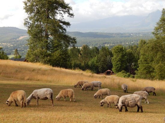 Mirador los Volcanes : Ovelhas