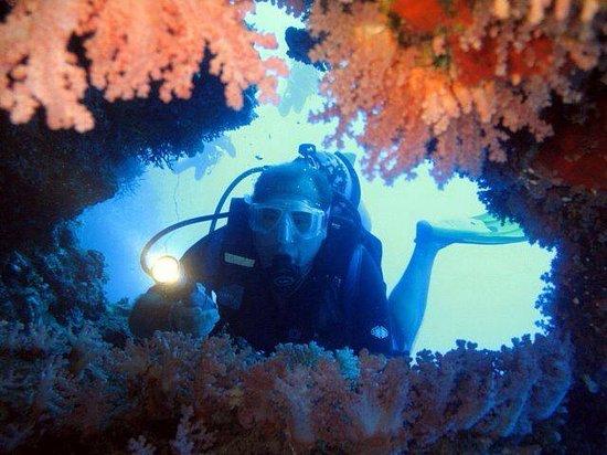 Diving Center Dive Club Italiano: Un mare di colori!!