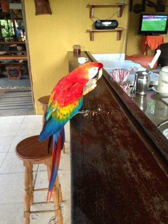 Amazon Ecopark Jungle Lodge: At the bar