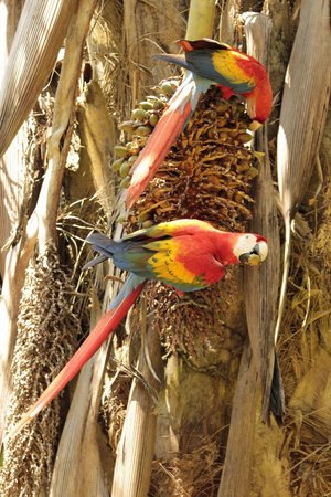 Lookout Inn Lodge: Macaws love new dates!
