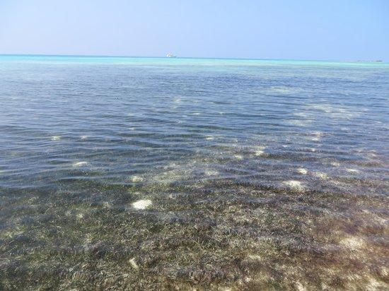 Medhufushi Island Resort: от вътрешната страна на рифа