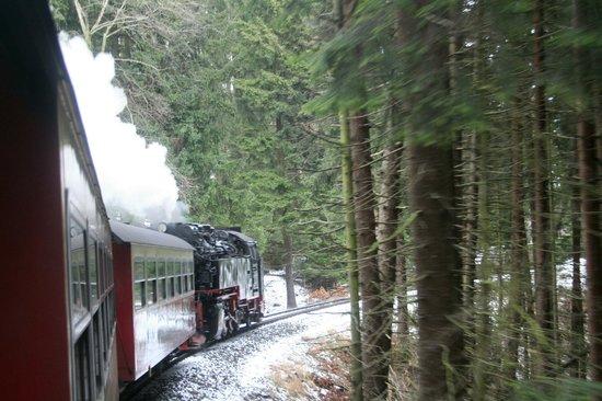Harzer Schmalspurbahnen: durch den Wald