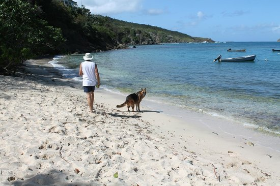 Hull Bay : Dog-Friendly Beach