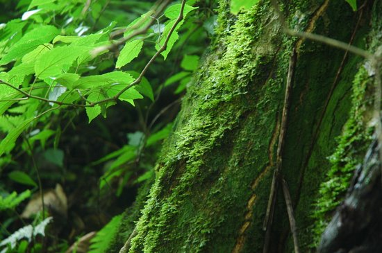 Zomba Forest Lodge: Rain Forest Moss