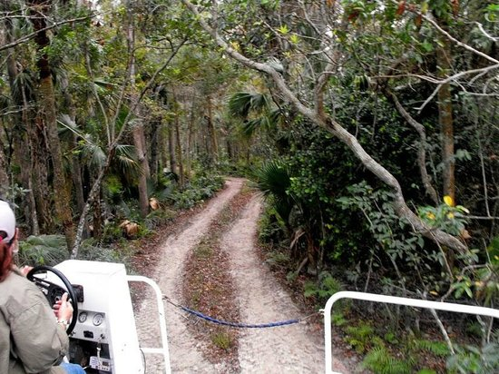 Wooten's Everglades Airboat Tour: Swamp Buggy ride through the jungle