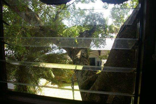 Tree Lodge Mauritius: Fenêtre sur cour