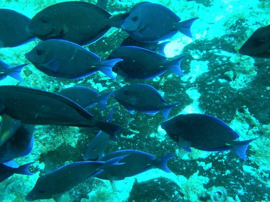 Two D's Diving and Tour Adventures: Fish