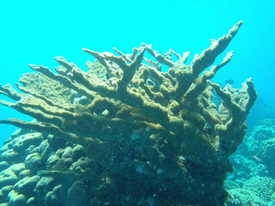 Two D's Diving and Tour Adventures: Coral