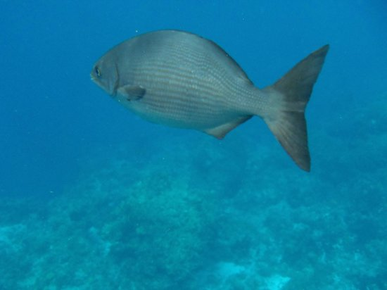 Two D's Diving and Tour Adventures: Fishy