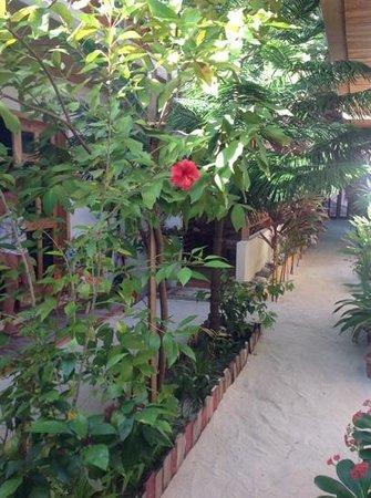 Stingray Beach Inn: giardino interno