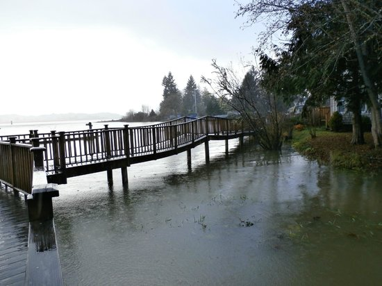 ide on the Columbia River sweeps under our wooden path  - Picture of