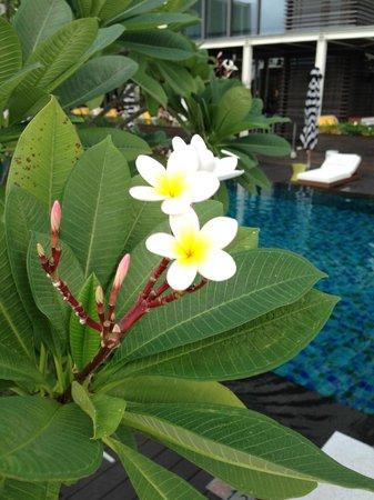 W Taipei : Plumeria by the pool.
