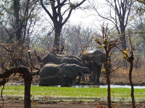 Wildlife Camp: Elephants visiting the campsite lagoon.