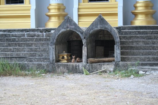 Hunde hvalpe - Picture of Tiger Cave Temple (Wat Tham Suea ...