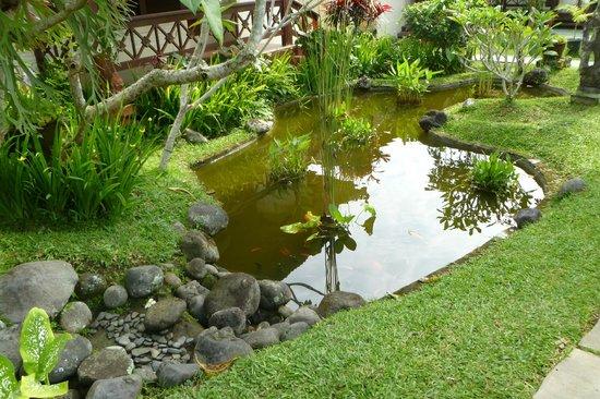 Villa Chempaka: Koi pond