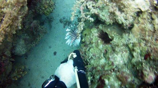 Jamaica Scuba Divers Ltd.: Lionfish