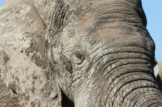 HillsNek Safaris, Amakhala Game Reserve : Getting up close and personal with the elephants