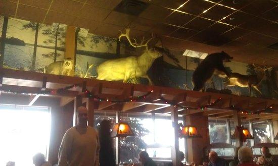 Kodiak Jack's Steak and Seafood: Taxidermy animals fun to look at