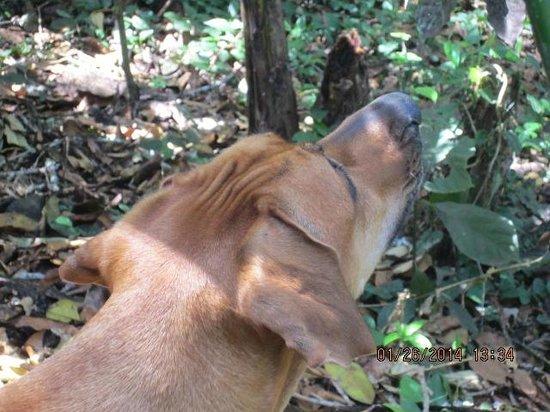 Mombacho Lodge: Alli watching the Howler monkeys