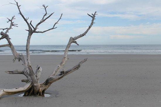 Little Talbot Island State Park: Naked trees