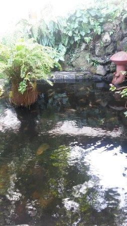 Hotel Rincon Vallero: Estanque de peces en el hotel