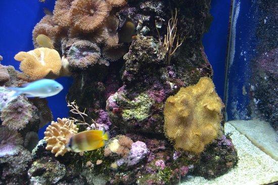 Aquarium Finisterrae: tanque
