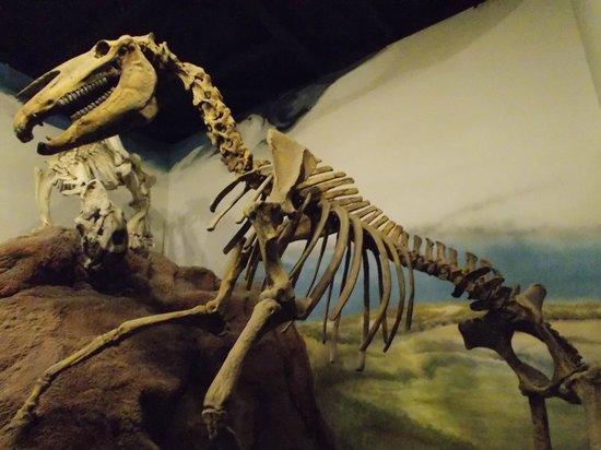 Museo Paleontologico Egidio Feruglio: Muy buenos ejemplares