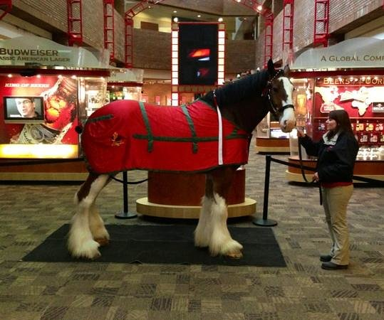 Budweiser Brewery Experience: Clydesdale