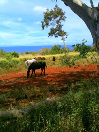 Happy Trails Hawaii: such a beautiful ride!
