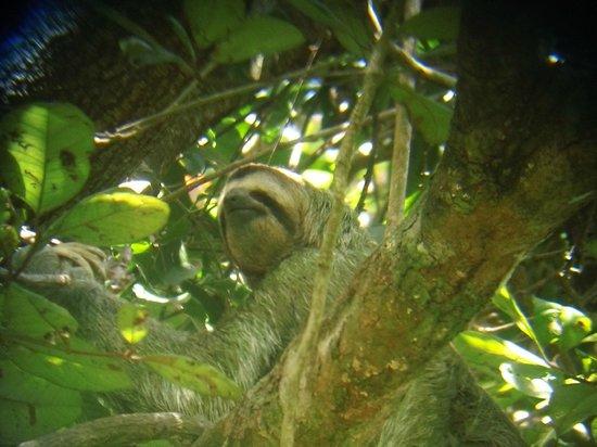 Condotel Las Cascadas: Sloths in the trees