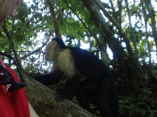 Condotel Las Cascadas: Monkeys visit