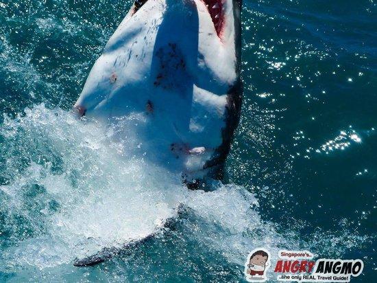 Marine Dynamics: Shark