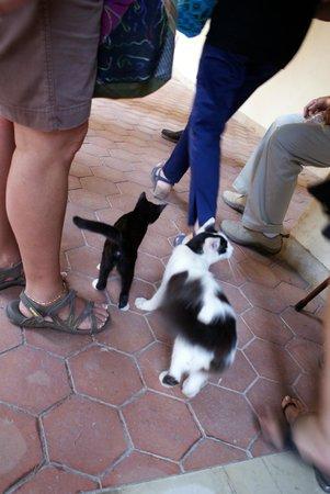 Katakomben des hl. Johannes (Katakomben von Syrakus): Need a cat?