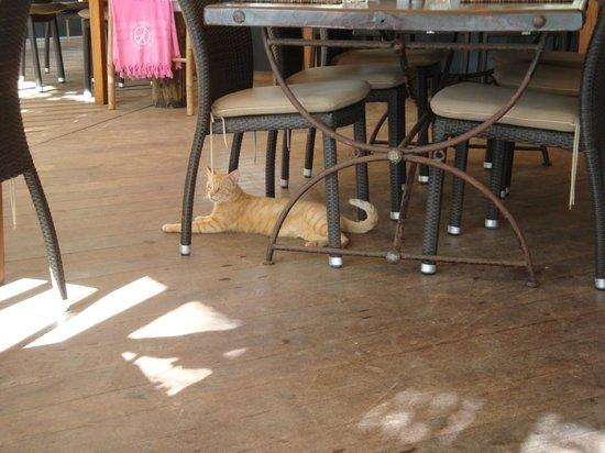 Do Brazil : Cool cat hangin around