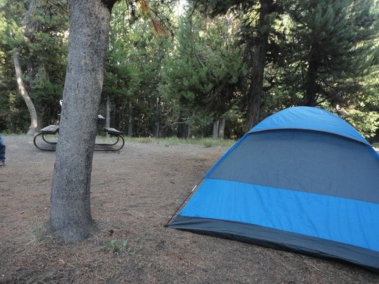 Grant Village Campground: Camp site