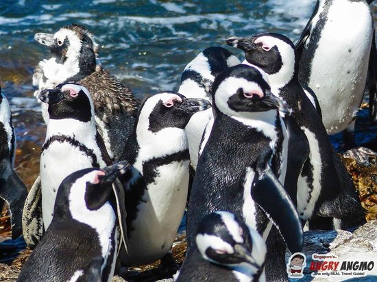 Stony Point Penguin Colony: Penguins at Betty's Bay