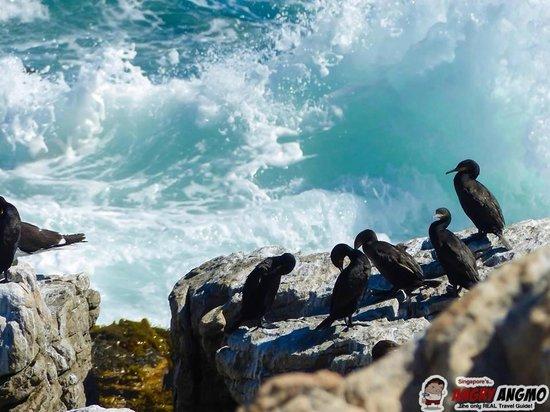 Penguins at Betty's Bay