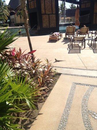 Villa del Palmar Cancun Beach Resort & Spa: Iguana