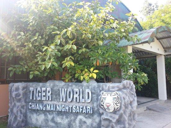 Chiang Mai Night Safari : Tiger World where lots of white tiger are breed