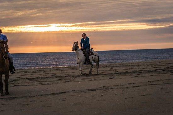 Virginia Beach Horseback 2020 All You