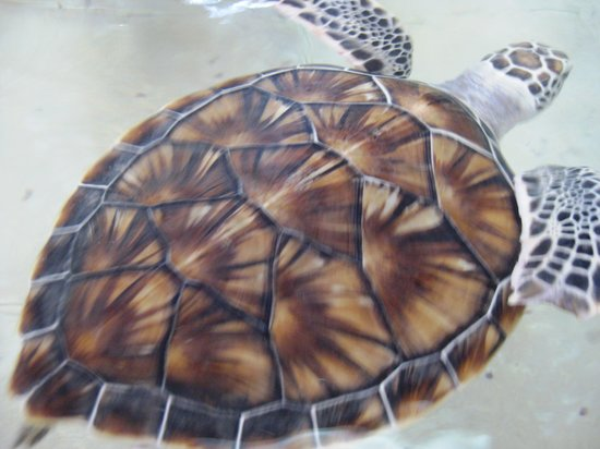Tortugranja (Turtle Farm): sea turtle