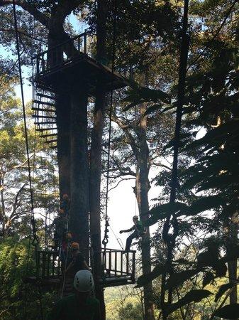 Jungle Flight : lift