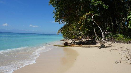 Dolphin Bay Hideaway: Bocas Del Toro